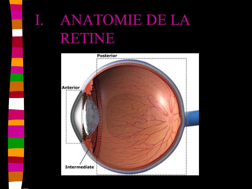 I. ANATOMIE DE LA RETINE