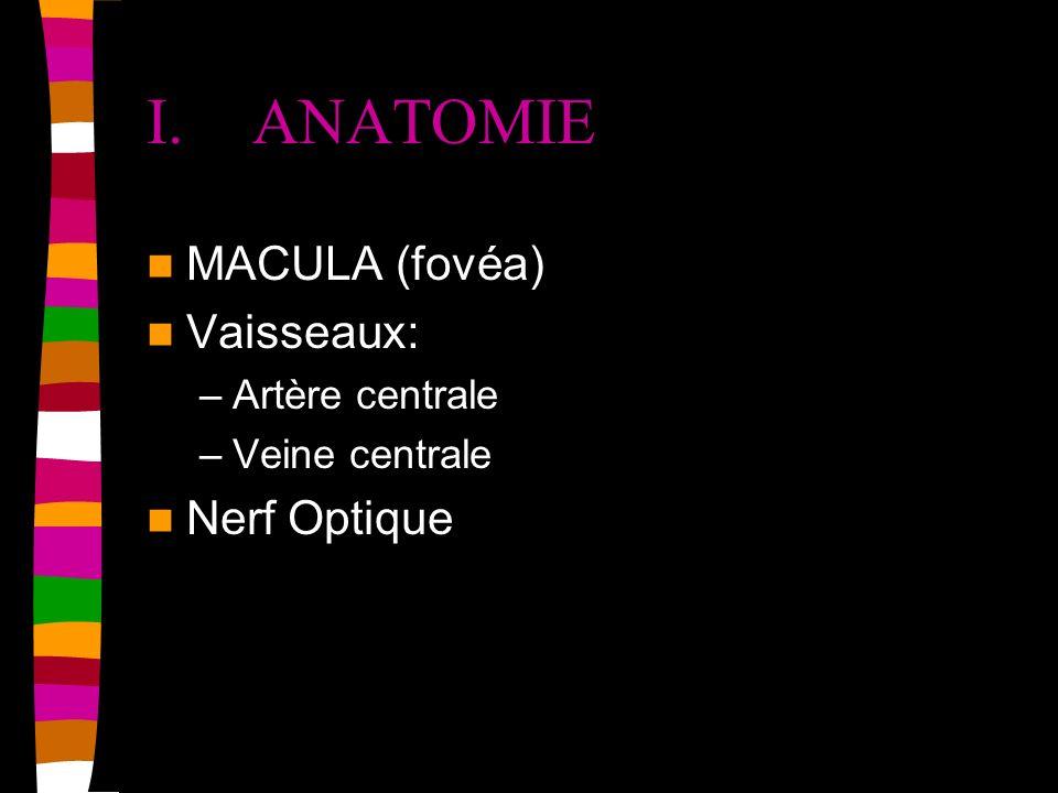 I. ANATOMIE MACULA (fovéa) Vaisseaux: Nerf Optique Artère centrale