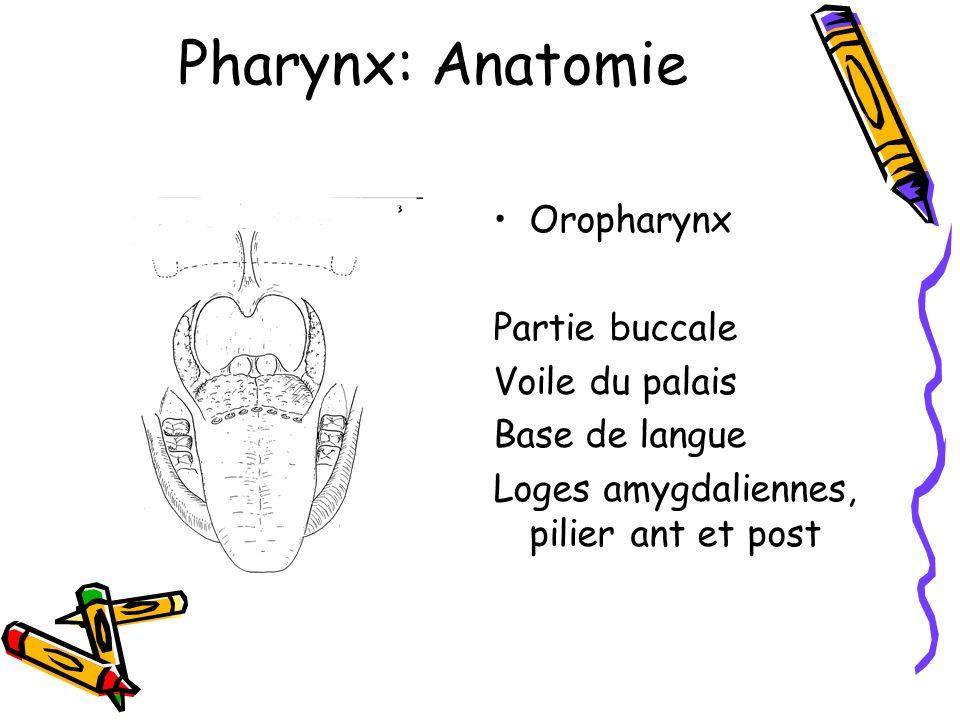 Pharynx: Anatomie Oropharynx Partie buccale Voile du palais