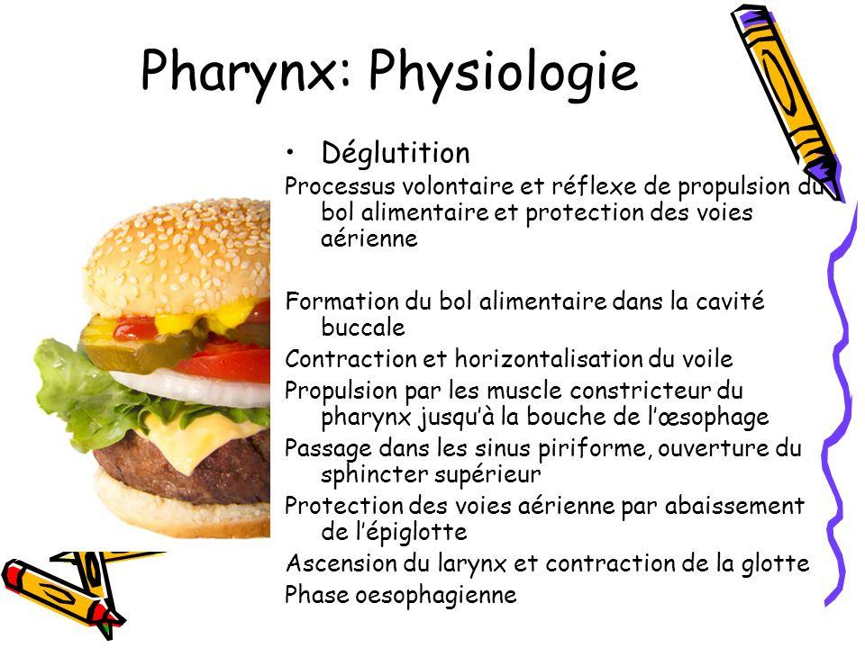 Pharynx: Physiologie Déglutition