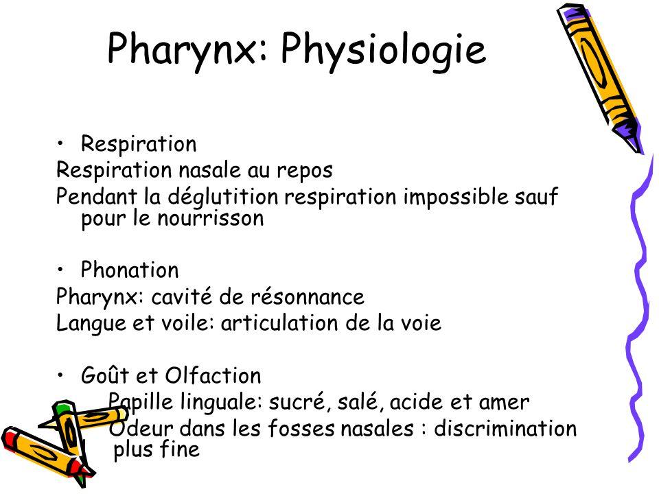 Pharynx: Physiologie Respiration Respiration nasale au repos