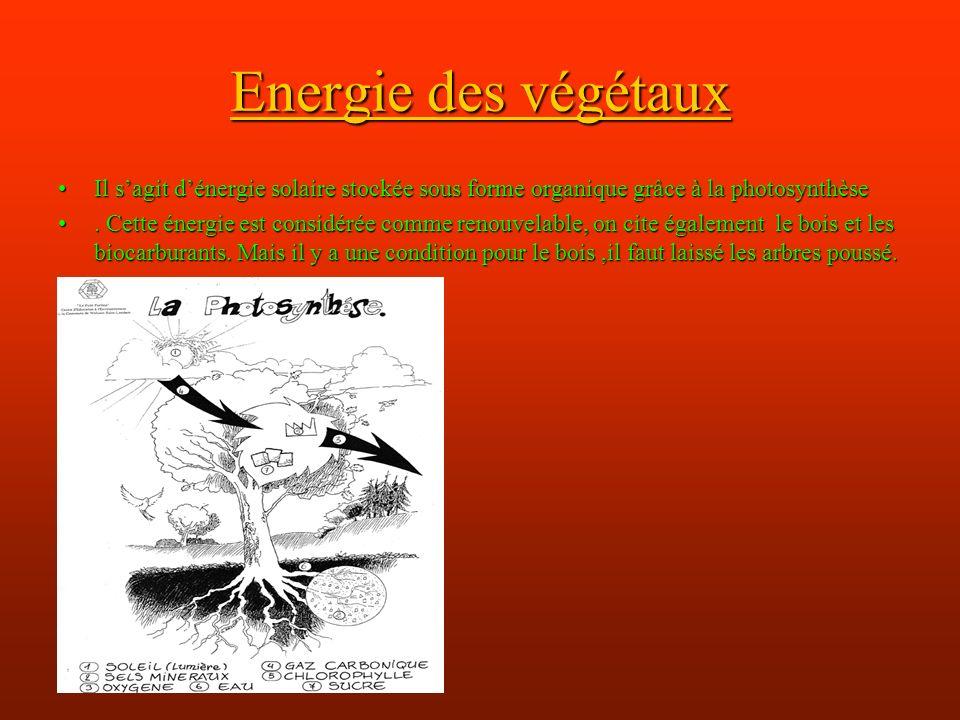 Energie des végétaux Il s'agit d'énergie solaire stockée sous forme organique grâce à la photosynthèse.