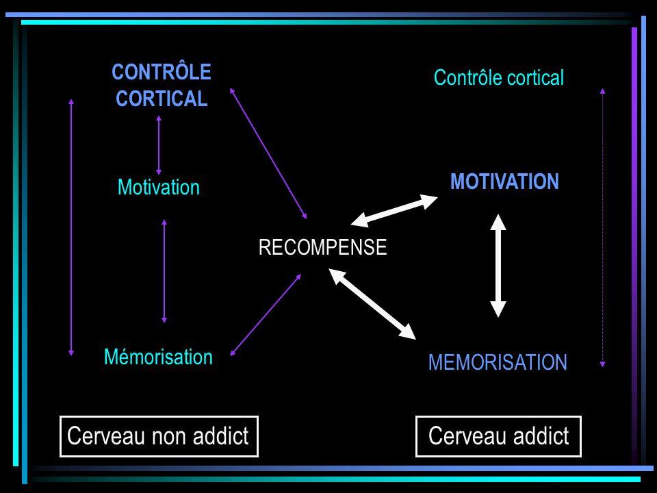 Cerveau non addict Cerveau addict CONTRÔLE CORTICAL Contrôle cortical