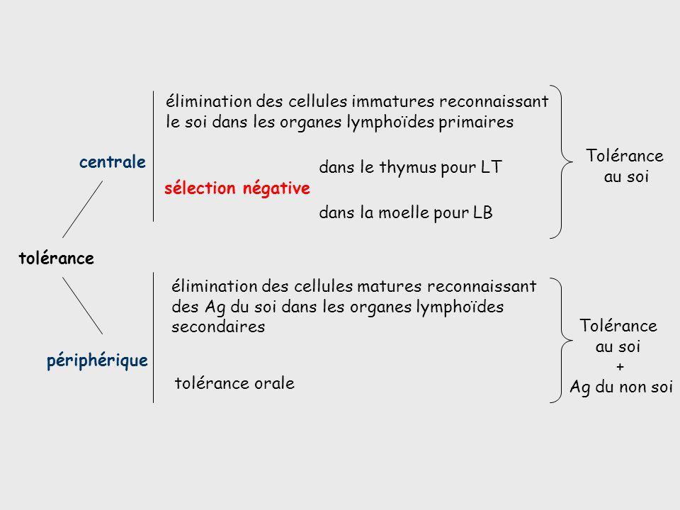 les organes lymphoides primaires et secondaires pdf