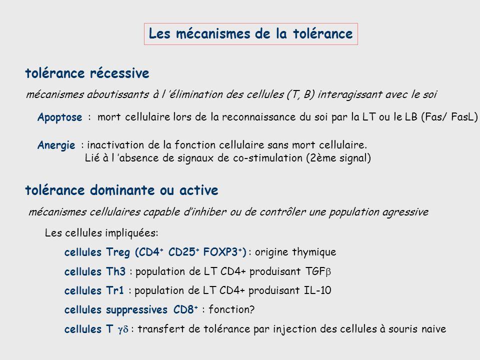 Les mécanismes de la tolérance