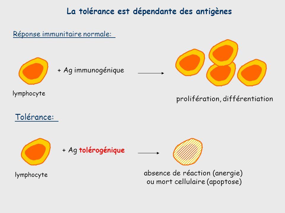 La tolérance est dépendante des antigènes