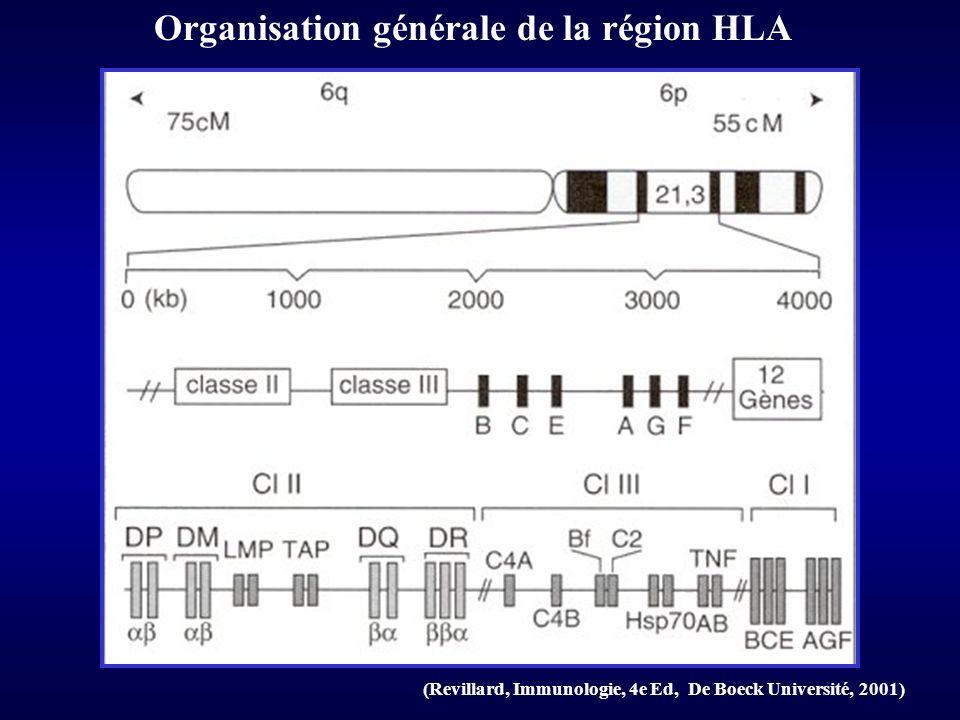 Organisation générale de la région HLA