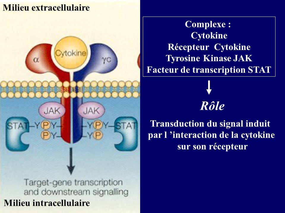 Rôle Milieu extracellulaire Complexe : Cytokine Récepteur Cytokine