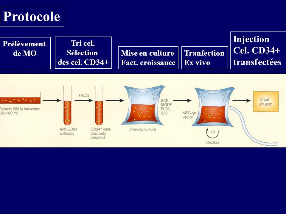 Protocole Injection Cel. CD34+ transfectées Prélèvement de MO Tri cel.