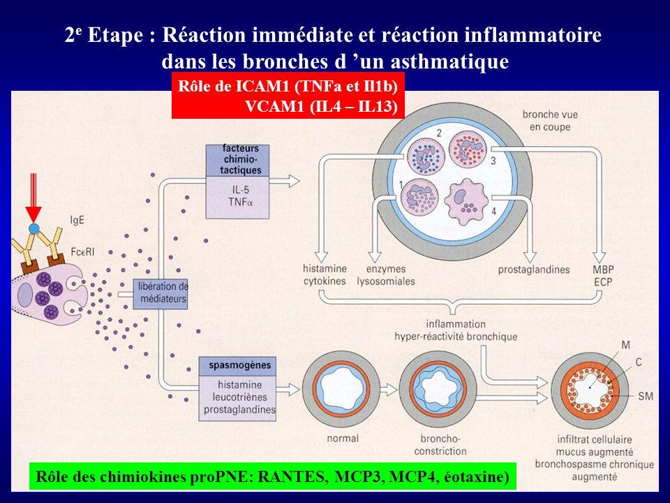 2e Etape : Réaction immédiate et réaction inflammatoire