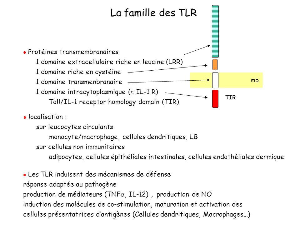 La famille des TLR 1 domaine extracellulaire riche en leucine (LRR)