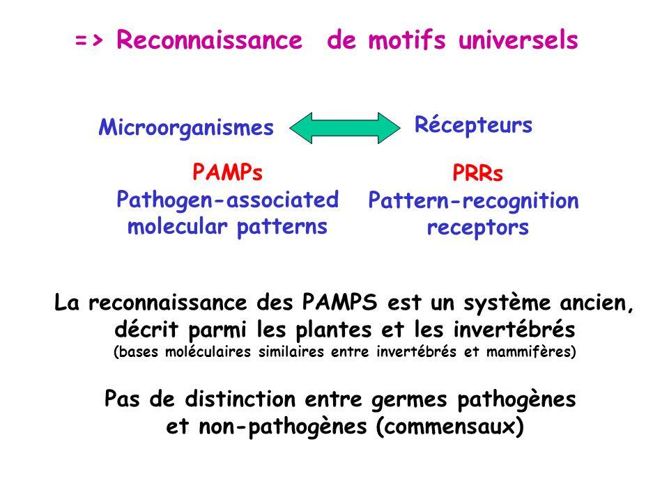 => Reconnaissance de motifs universels