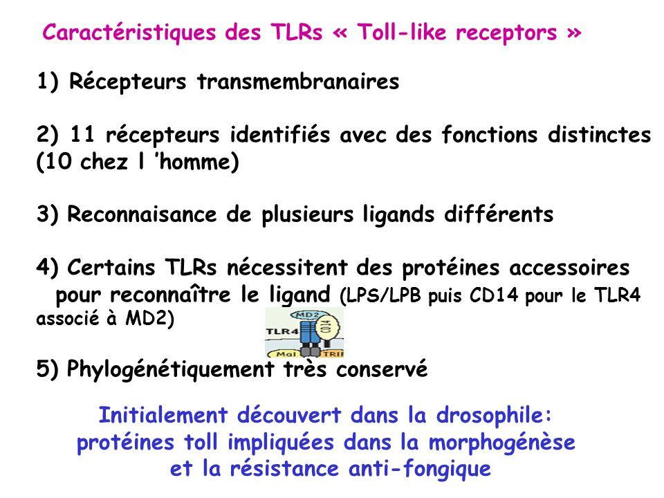 Caractéristiques des TLRs « Toll-like receptors »