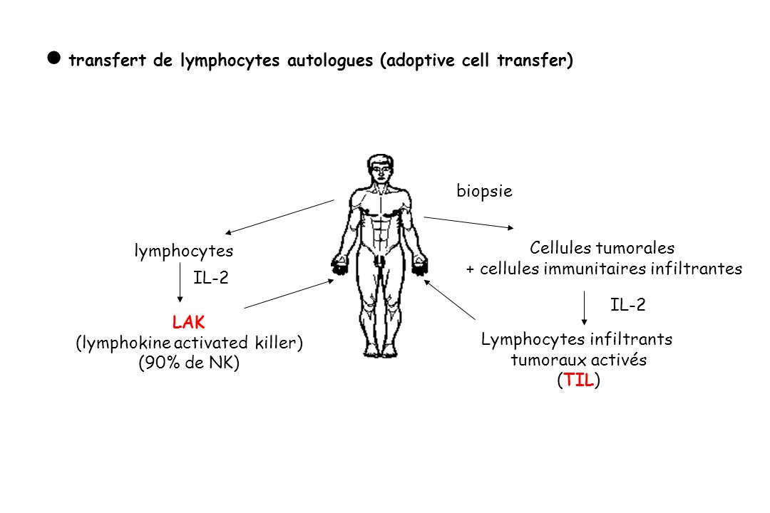  transfert de lymphocytes autologues (adoptive cell transfer)