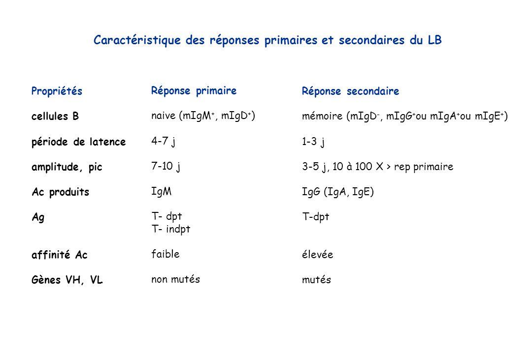 Caractéristique des réponses primaires et secondaires du LB