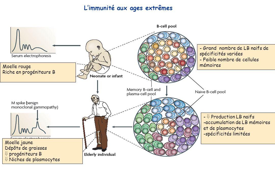 L'immunité aux ages extrêmes