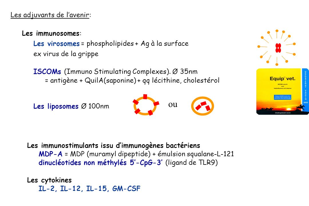 ou Les adjuvants de l'avenir: Les immunosomes: