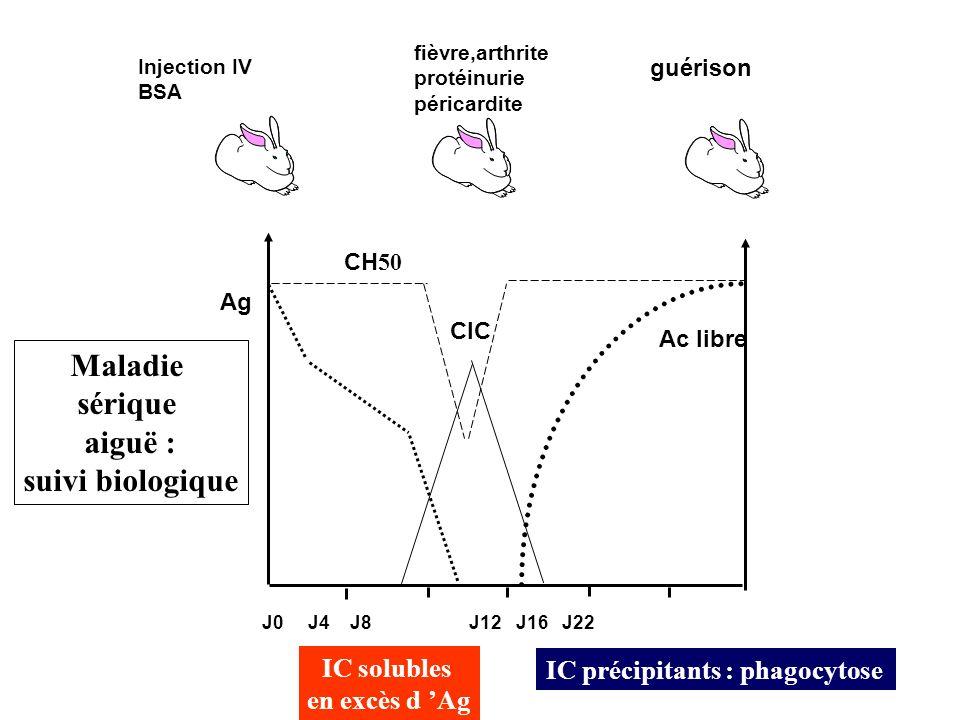 Maladie sérique aiguë : suivi biologique
