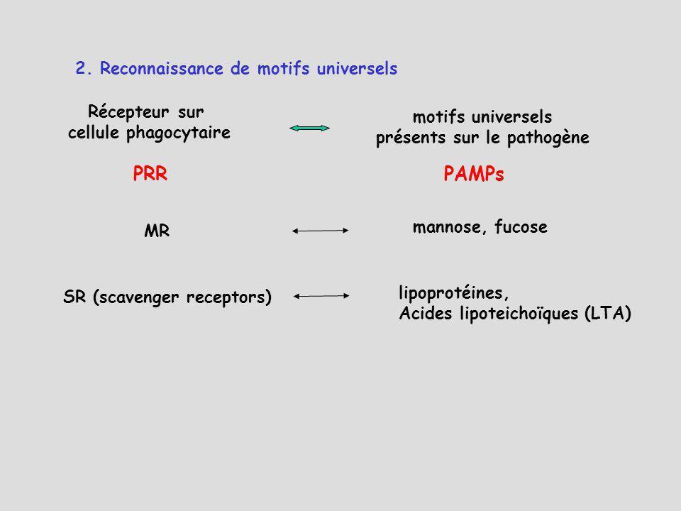 roitt essential immunology 10th edition pdf