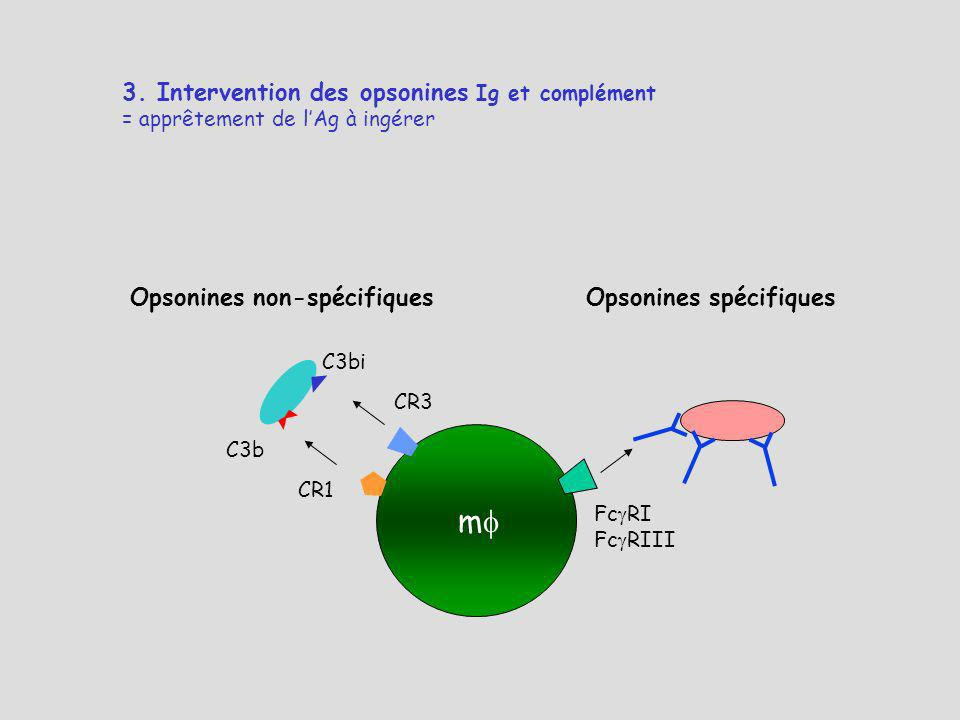 m 3. Intervention des opsonines Ig et complément