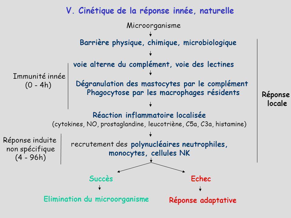 V. Cinétique de la réponse innée, naturelle