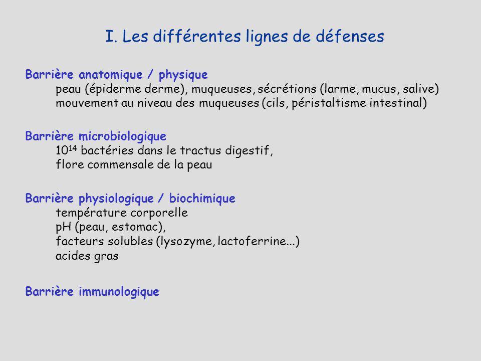 I. Les différentes lignes de défenses