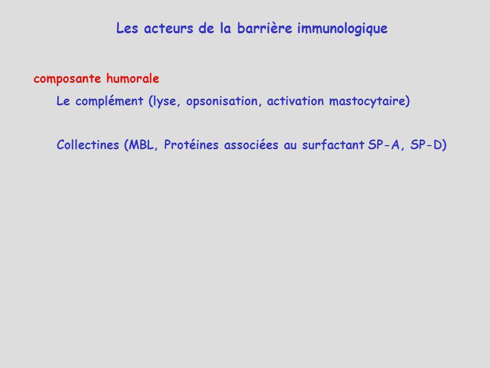 Les acteurs de la barrière immunologique
