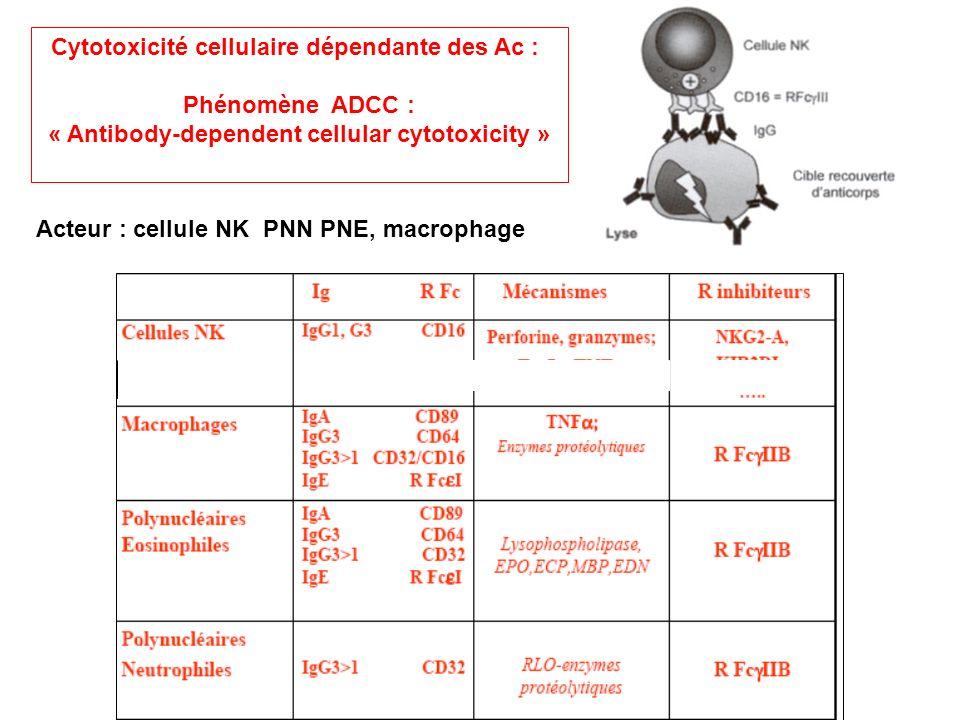Cytotoxicité cellulaire dépendante des Ac : Phénomène ADCC :