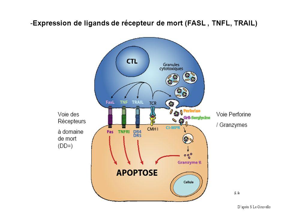Expression de ligands de récepteur de mort (FASL , TNFL, TRAIL)