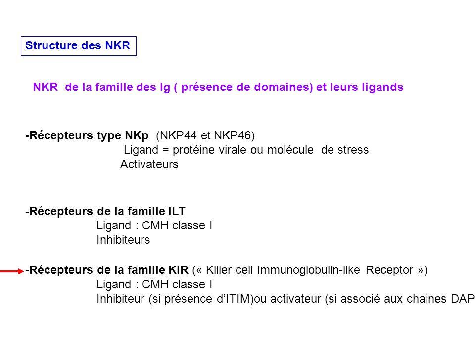 Structure des NKR NKR de la famille des Ig ( présence de domaines) et leurs ligands. -Récepteurs type NKp (NKP44 et NKP46)