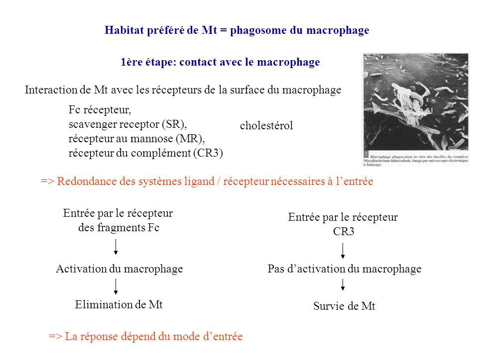 Habitat préféré de Mt = phagosome du macrophage