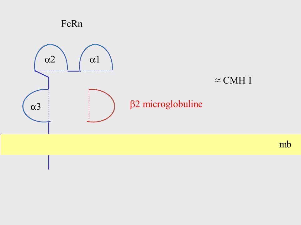FcRn a2 a1 ≈ CMH I b2 microglobuline a3 mb