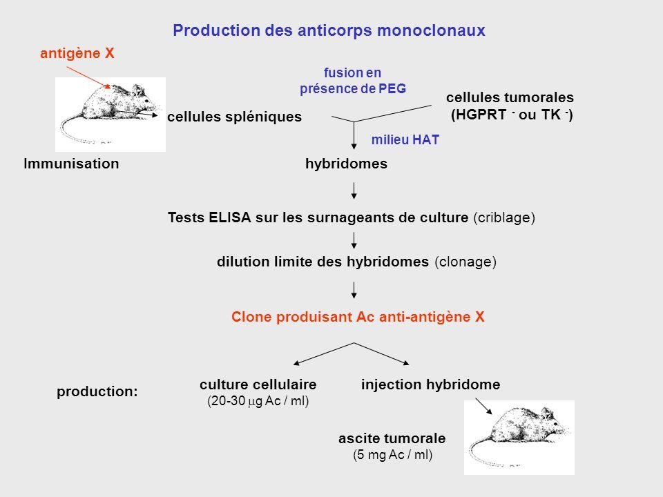 Production des anticorps monoclonaux