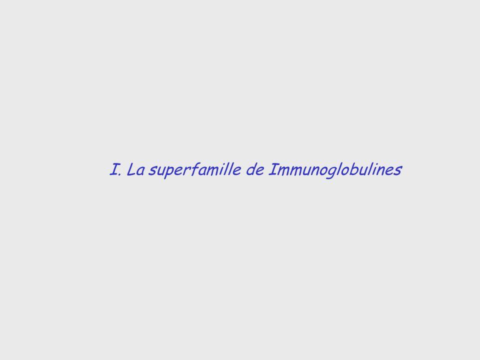 I. La superfamille de Immunoglobulines