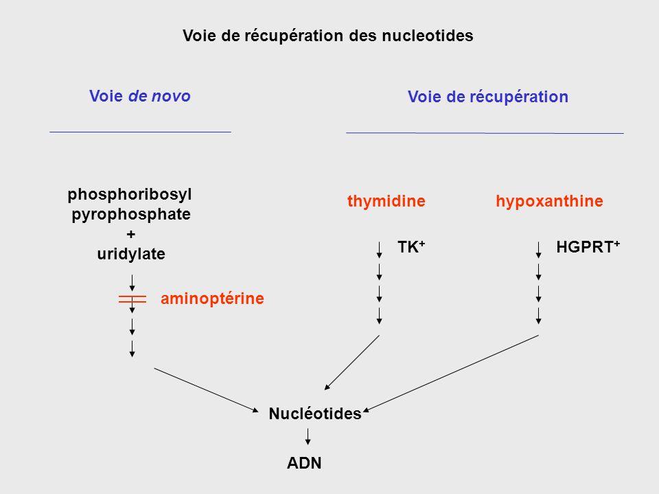 Voie de récupération des nucleotides