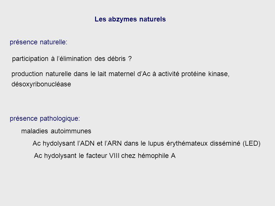 Les abzymes naturels présence naturelle: participation à l'élimination des débris