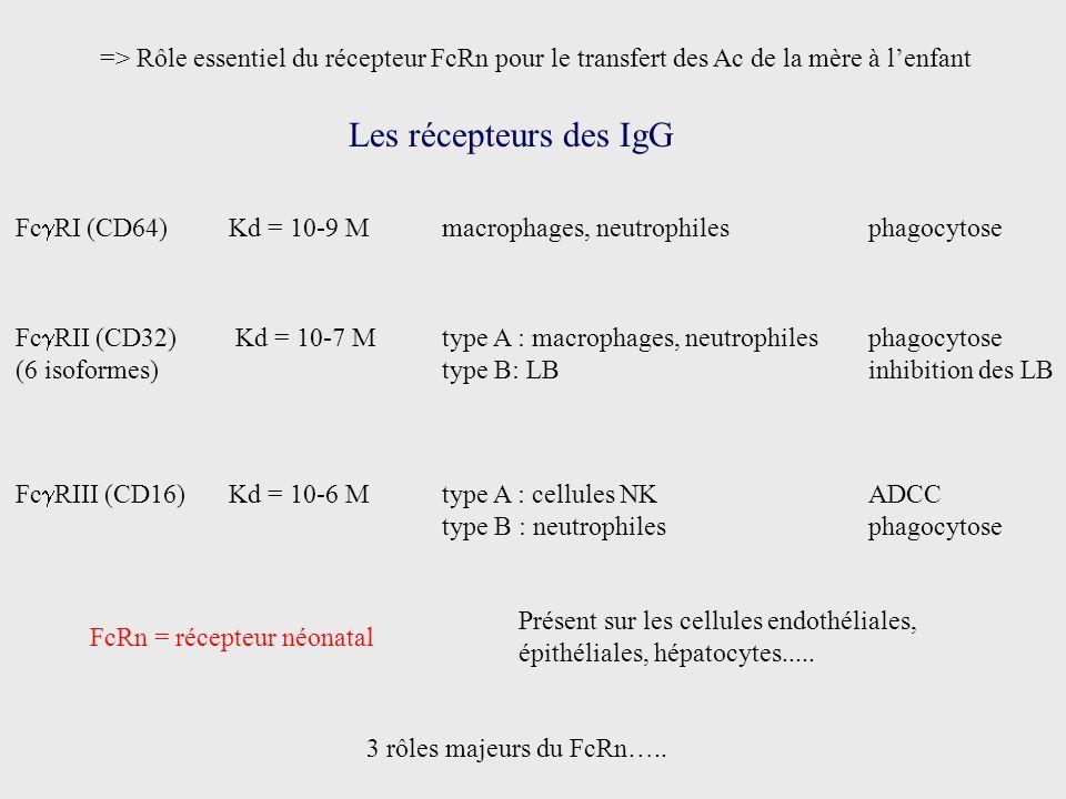 => Rôle essentiel du récepteur FcRn pour le transfert des Ac de la mère à l'enfant