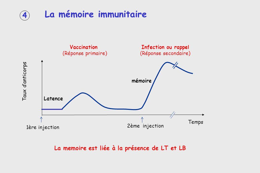 La memoire est liée à la présence de LT et LB