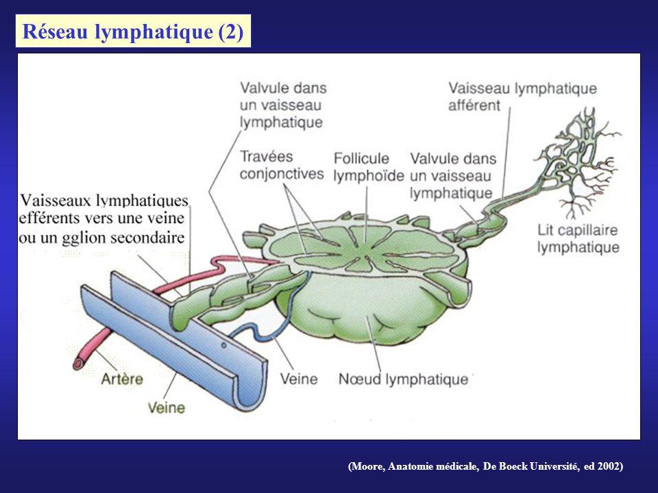 Réseau lymphatique (2) (Moore, Anatomie médicale, De Boeck Université, ed 2002)