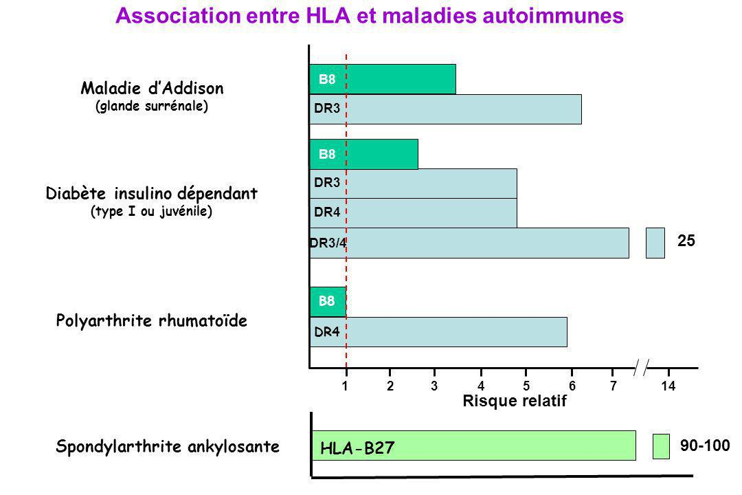 Association entre HLA et maladies autoimmunes