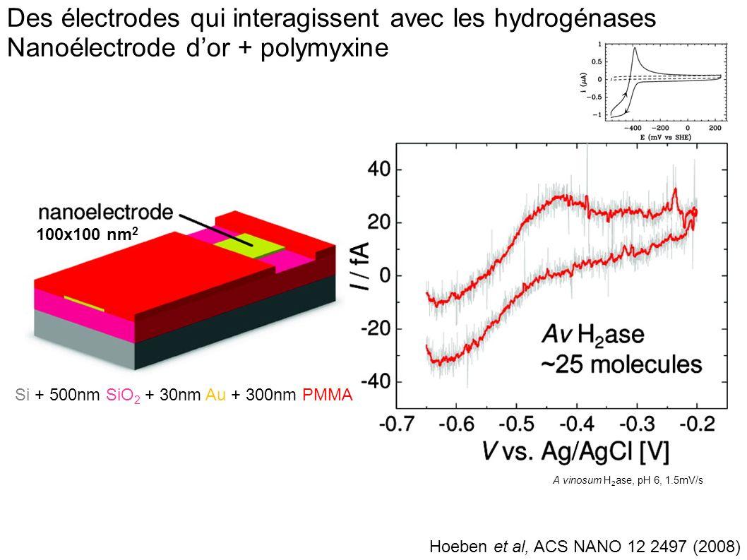 Des électrodes qui interagissent avec les hydrogénases