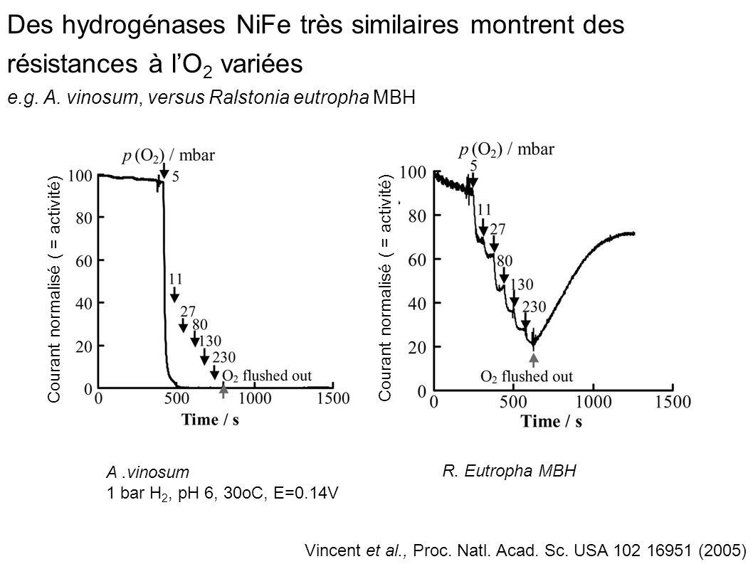 Des hydrogénases NiFe très similaires montrent des résistances à l'O2 variées e.g. A. vinosum, versus Ralstonia eutropha MBH