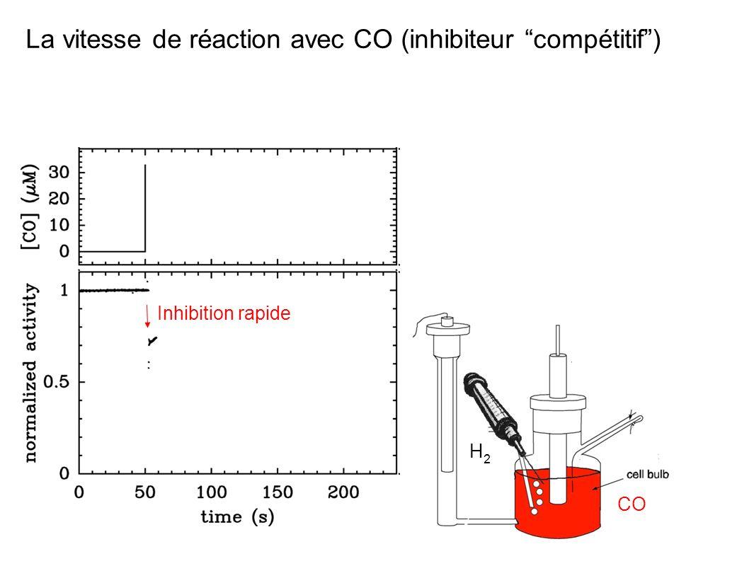 La vitesse de réaction avec CO (inhibiteur compétitif )