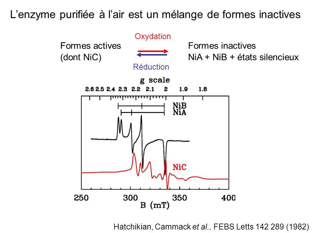 L'enzyme purifiée à l'air est un mélange de formes inactives