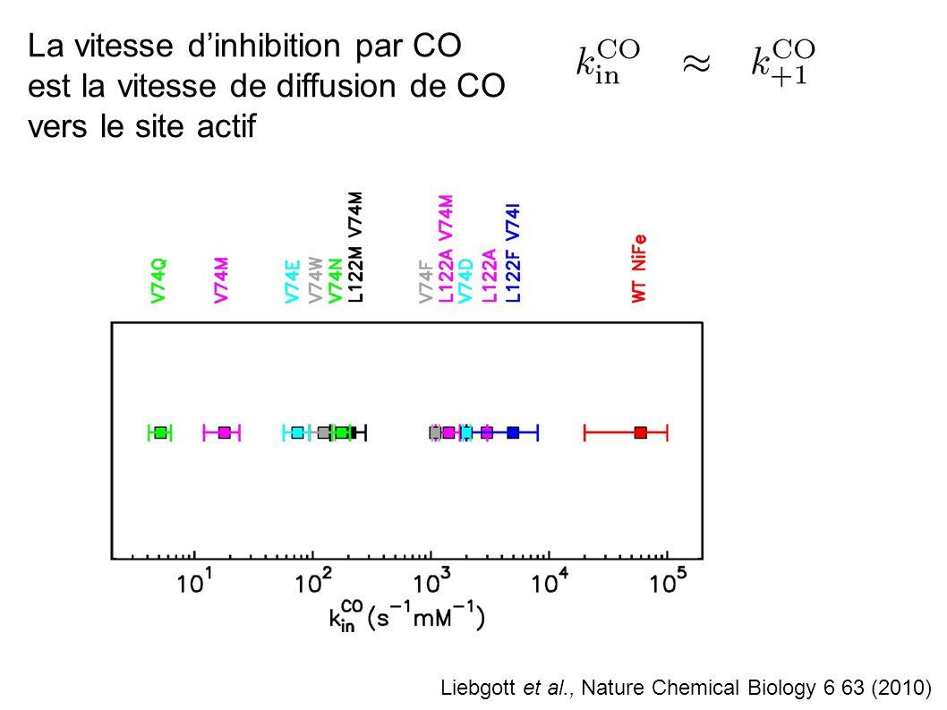 La vitesse d'inhibition par CO est la vitesse de diffusion de CO vers le site actif