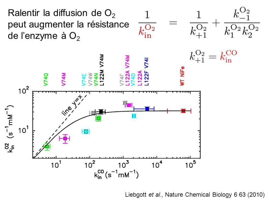 Ralentir la diffusion de O2 peut augmenter la résistance de l'enzyme à O2