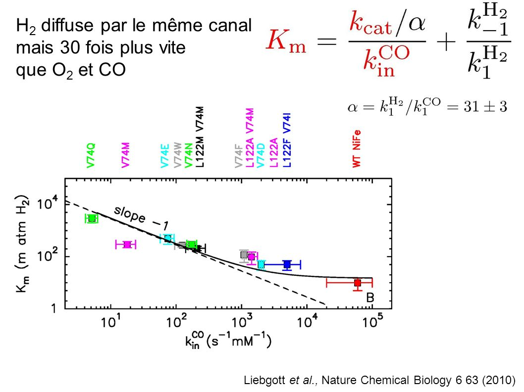 H2 diffuse par le même canal mais 30 fois plus vite que O2 et CO