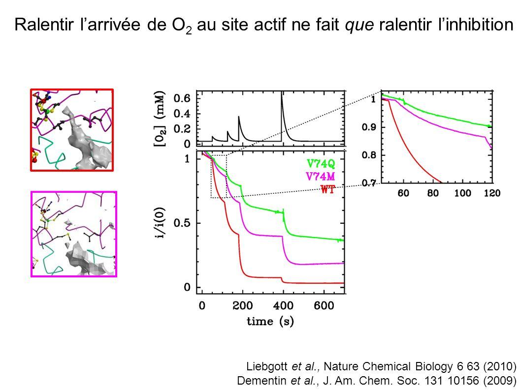 Ralentir l'arrivée de O2 au site actif ne fait que ralentir l'inhibition