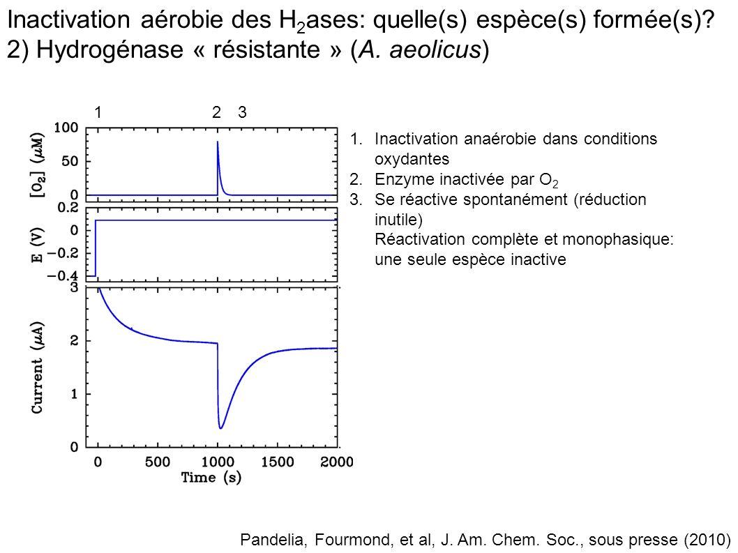 Inactivation aérobie des H2ases: quelle(s) espèce(s) formée(s)