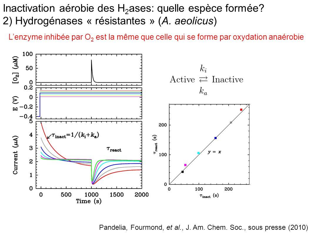 Inactivation aérobie des H2ases: quelle espèce formée